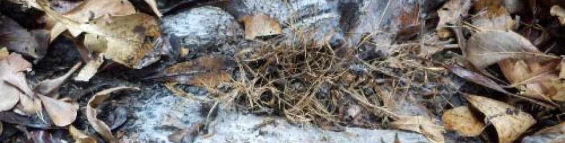 林木病害圖片