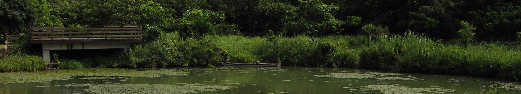 屏東水池塘照片