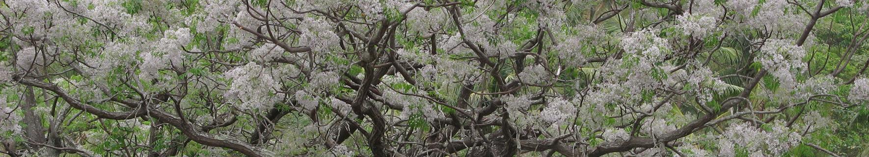 太麻里樹木圖